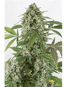Ampolleta Haluro Metal 250W Extra Lumen - Grow Genetics