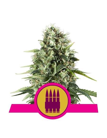 Green Grow NPK 5-3-5 250ml- Quemanta